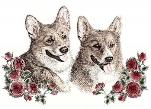 コーギー ペン画 犬